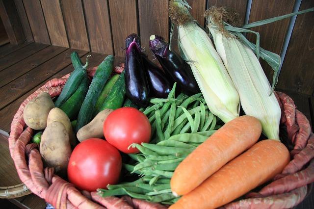 夏野菜フェア